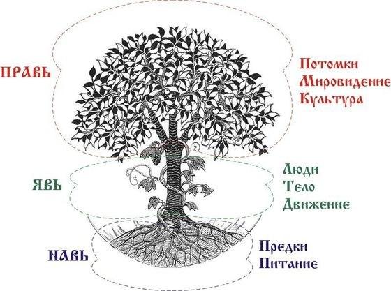 rod drevo2.jpg
