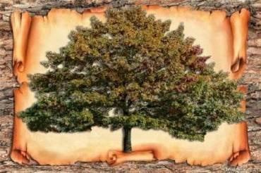 rod drevo3.jpg